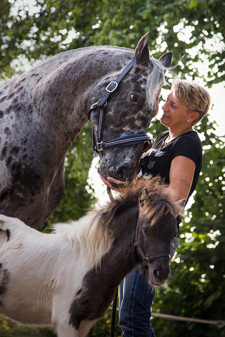 dierenfotograaf paarden