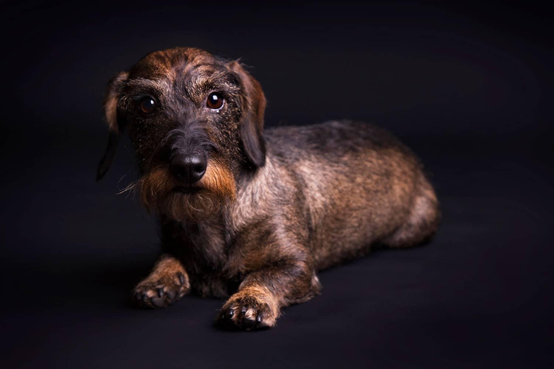 fotoshoot hond in de studio