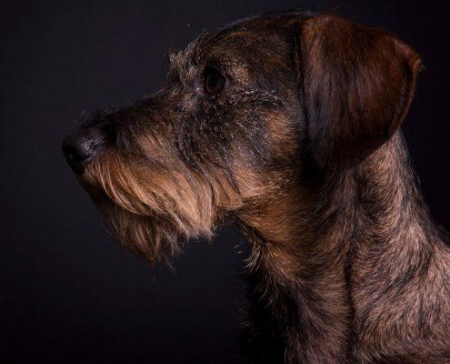 hondenfotoshoot