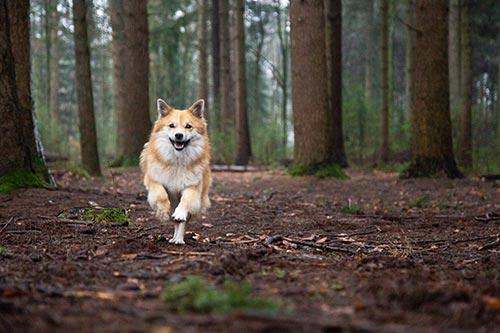 bedrijfsfotograaf hondenuitlaatservice