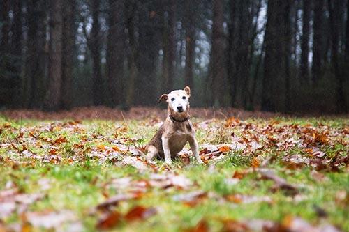 fotograaf eindhoven dierenfotografie