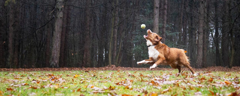 fotograaf honden buiten