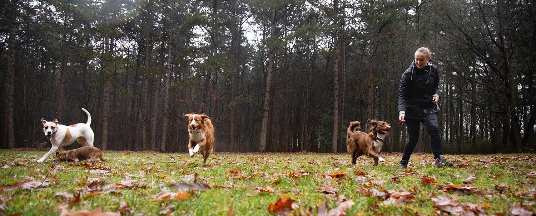 fotograaf hondenuitlaatservice
