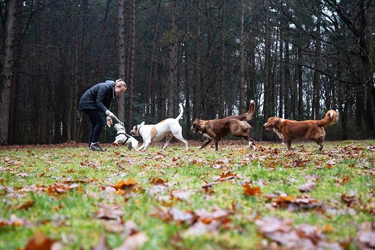 fotoshoot met honden