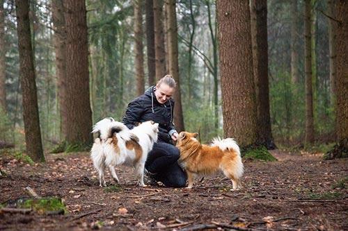 honden fotoshoot bedrijven