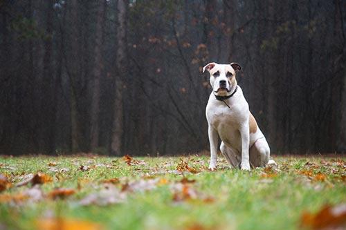 hondenuilaatservice fotograaf