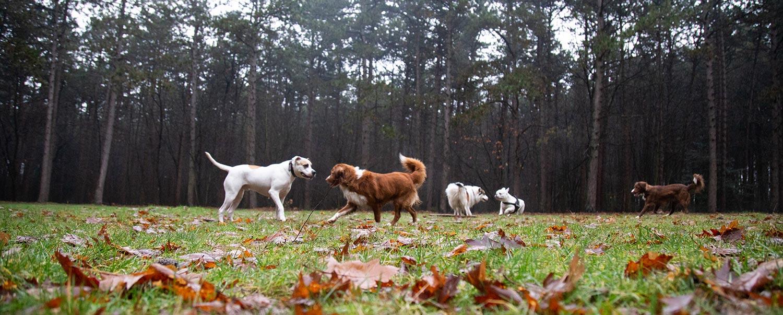 professionele hondenfotograaf