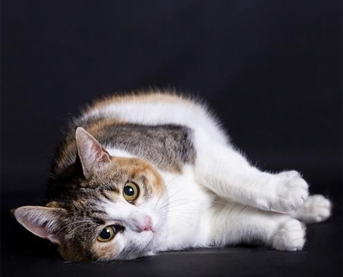 Katten fotoshoot in de studio