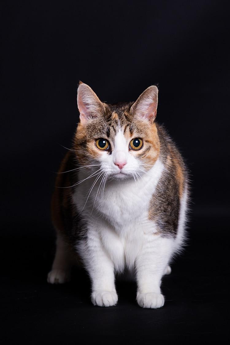 kattenfotoshoot studio
