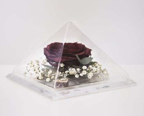 roos in glazen piramide