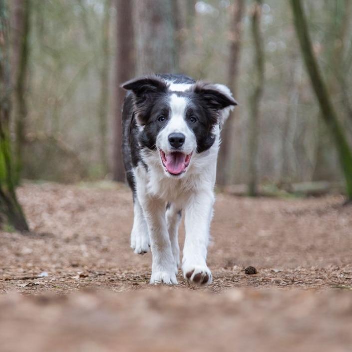 Fotoshoot hond bos