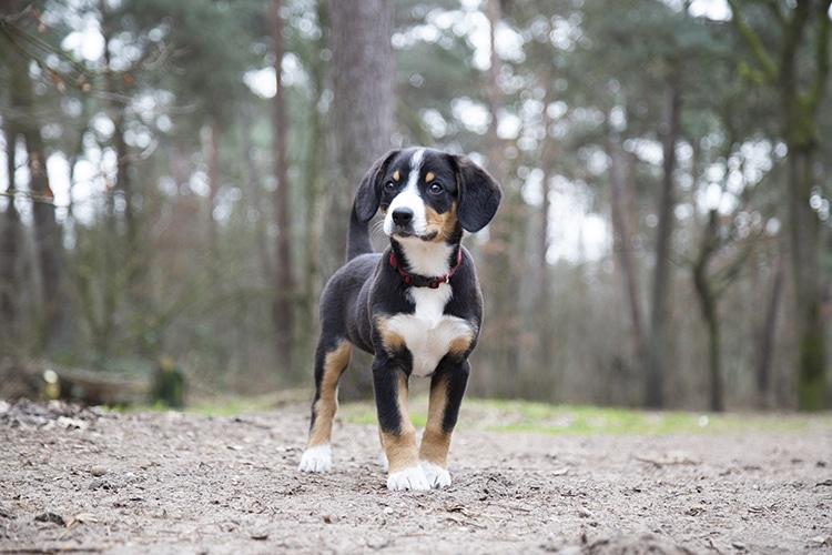 Fotoshoot puppy
