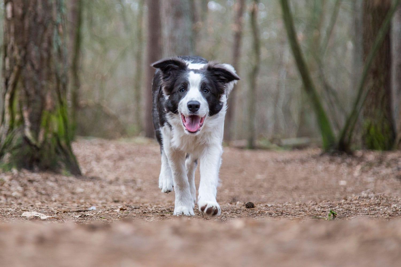 Hondenfotograaf buiten