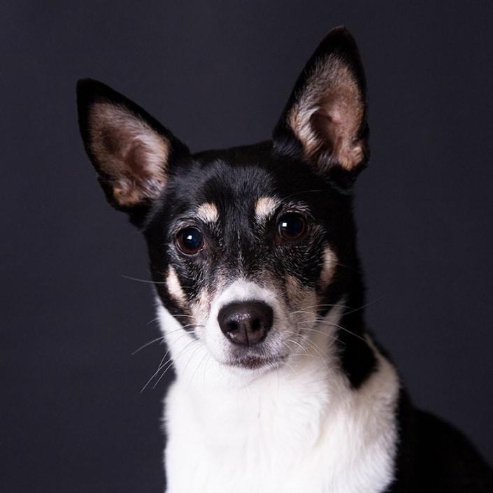 Hondenfotograaf studio