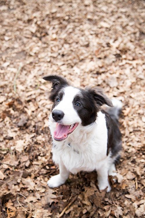 Hondenfotografie Landerd