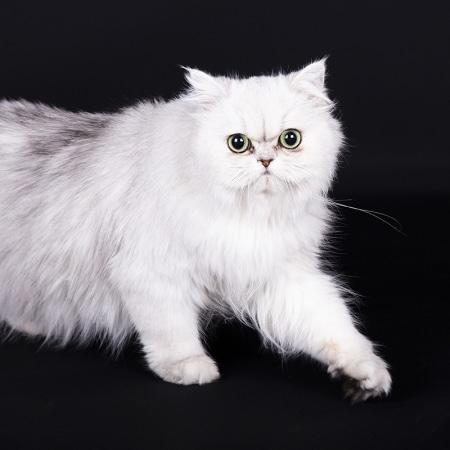 Kattenfotograaf Zeeland