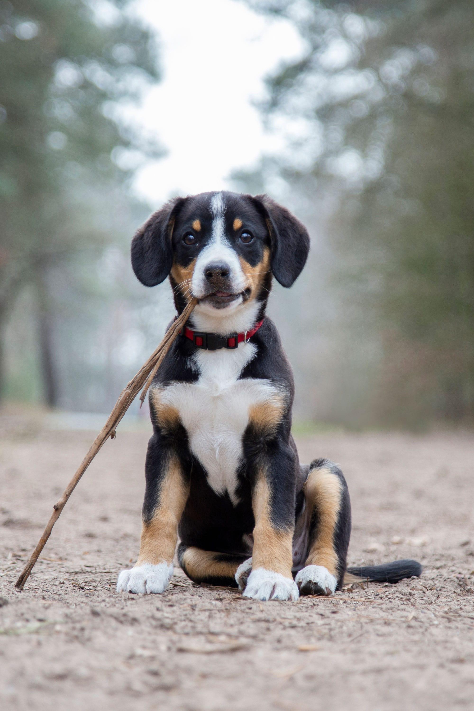 hondenfotograaf in het bos
