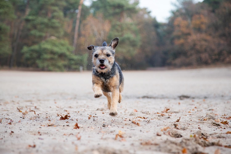 rennende hond foto
