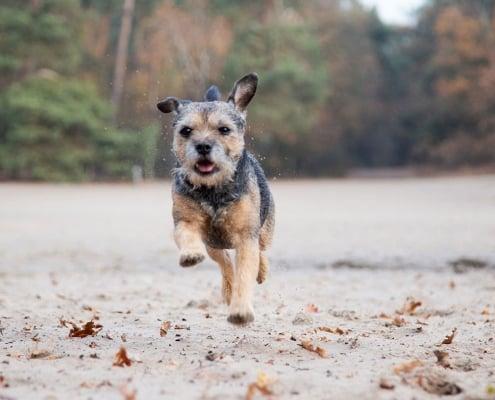 fotoshoot hond in de natuur-uden