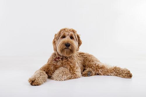 mooie honden foto