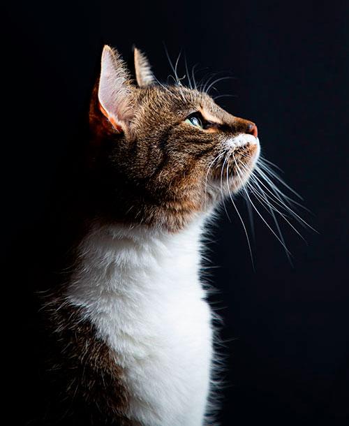 foto van kat op zwarte achtergrond