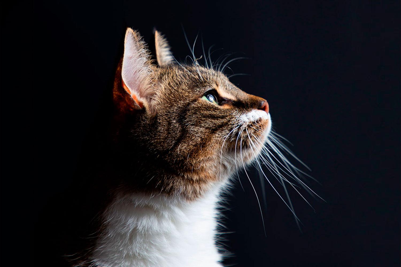 kattenfotograaf in zeeland