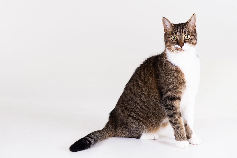 kattenfotoshoot
