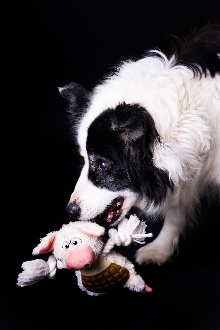 speelse hondenfotografie