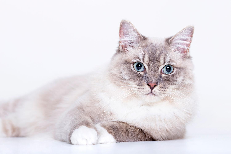 Fotograaf dieren katten