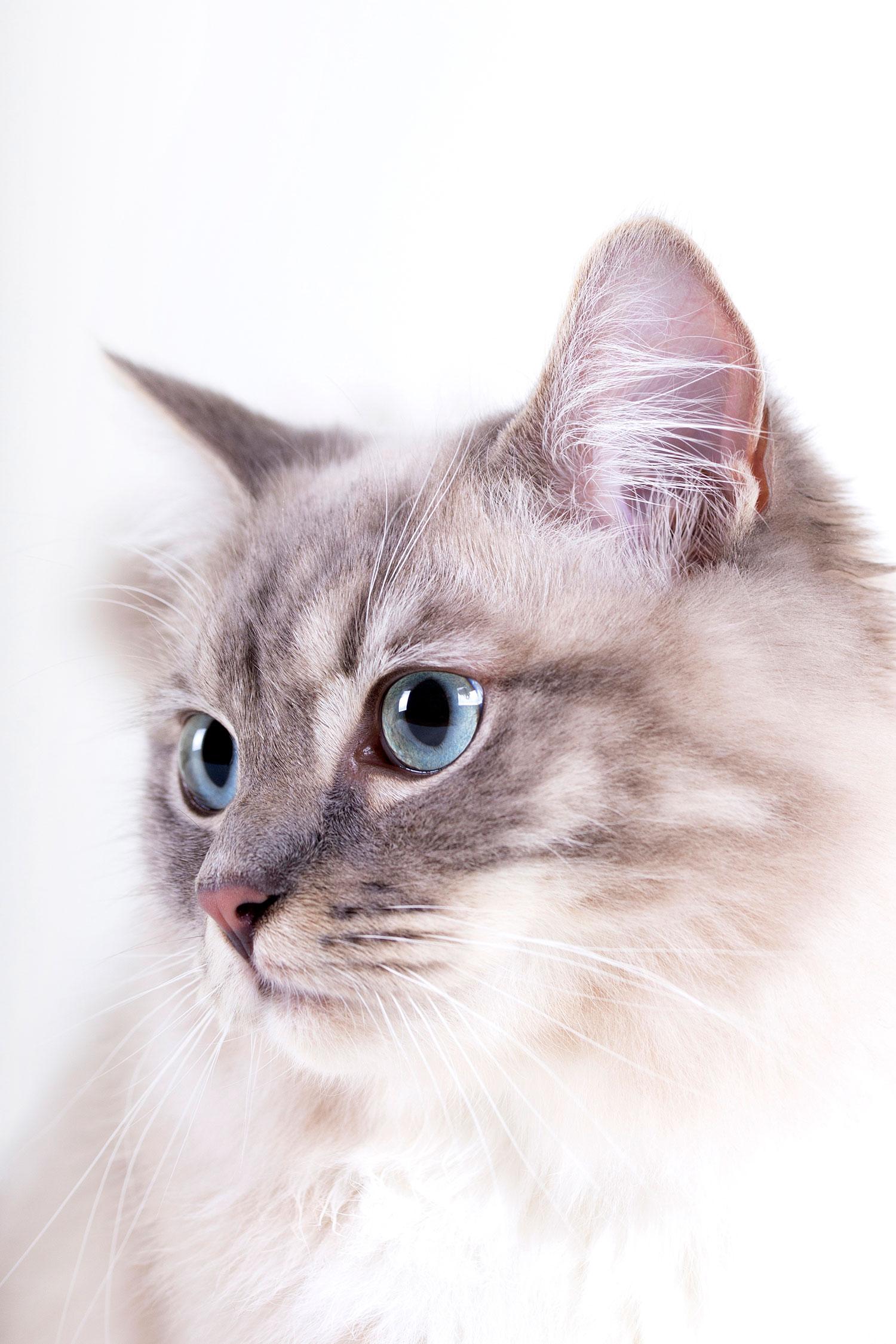 Fotograaf katten omgeving Uden