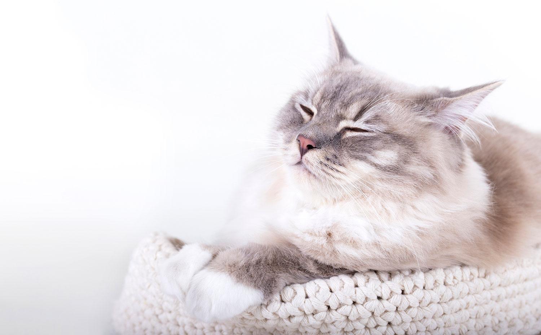 katten fotoshoot professioneel studio brabant