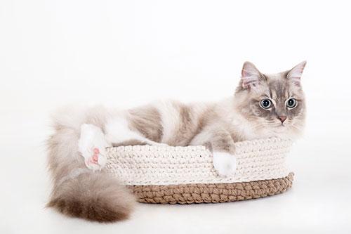 ongewdongen katten fotoshoot fotograaf